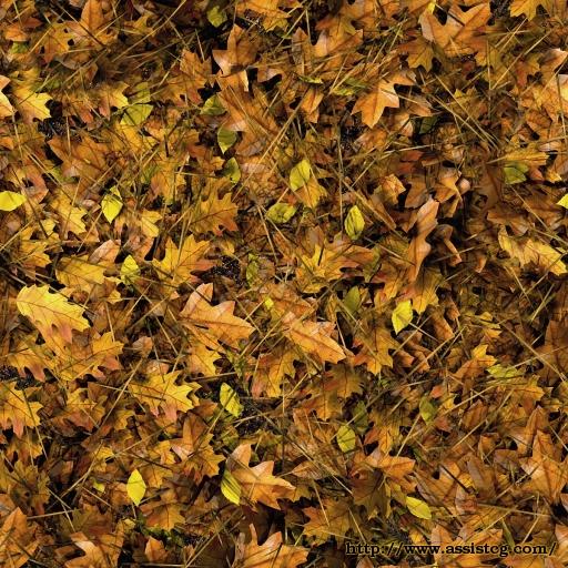 Ground Autumn