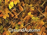 Ground Autumn